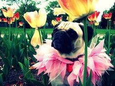 Pug Flower by ~vacantdreamsx3 on deviantART