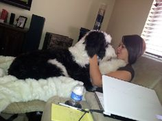 I cannot wait for my sheepadoodle <3