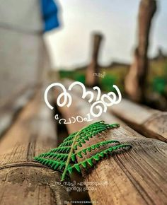 Love Quotes In Malayalam, Love Poems Wedding, Miss U My Love, Love Status Whatsapp, Crazy Feeling, Lonliness, My Crazy, Solitude, Annie