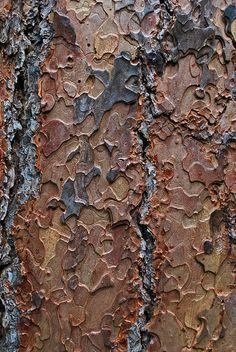 Puzzle Bark by junglejims photos, via Flickr