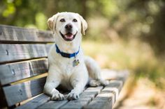 Larger than life? We're sure they think so! Large dogs typically tip the scales at 55 to 85 pounds. ... - Getty