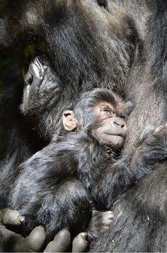 Image by Ari Beser . Wildlife/Scenic category.