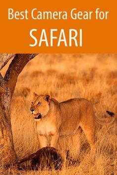 for hobby photographers wondering what camera equipment to take for safari in Africa. What kind of camera and lenses you need in order to photograph safari -- Check out this great article. #AwesomePictures