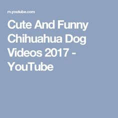 Cute And Funny Chihuahua Dog Videos 2017 - YouTube