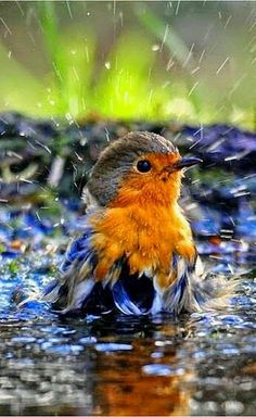 "I think it is fun to watch birds take a bath in the bird bath ""MI AMOR""."