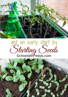 56 Best Seed Starting Hacks Images In 2020 Seed Starting Garden
