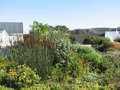 Fynbos Gardens Hermanus: House Eustace - Prestwick Village - Hermanus. Garden Inspiration, Garden Ideas, Water Wise, Garden Stones, Garden Design, Gardens, Landscape, Park, Fingers