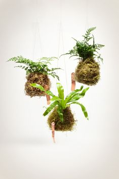 Look what I found! Fern String Garden on Pistilsnursery.com These we can make. The growing matter is just moss!