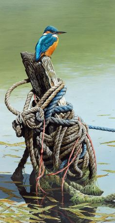 """""""All Tied Up"""" (Kingfisher) by Terance James Bond. Signed Giclee Print-Strictly Limited to 65 Copies only. Visible Image x Wildlife Paintings, Wildlife Art, Beautiful Birds, Animals Beautiful, Bird Pictures, Colorful Birds, Kingfisher, Wild Birds, Bird Watching"""