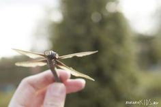 Maple Seed Dragonfly.