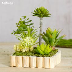 How would you call this artificial arrangement we've created? We've called it succulent planter :) Artificial Silk Flowers, Succulents, Planters, Xmas, Tropical, Create, Floral, Diy, Cooking