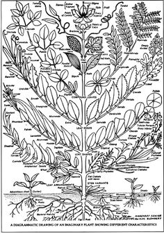 Identifying Plants - diagram of Linnaeus's plant classification system based on flower structure