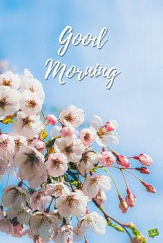 Good Morning picture with spring blooms. Good Morning Wednesday, Cute Good Morning Quotes, Morning Quotes Images, Morning Memes, Good Morning Inspirational Quotes, Happy Morning, Good Morning Picture, Good Morning Flowers, Good Morning Messages