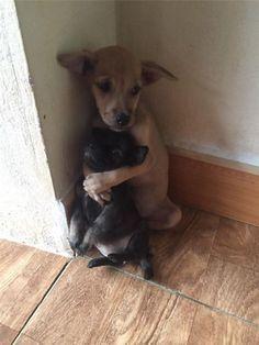 Este par de cachorros callejeros no han parado de abrazarse desde que fueron rescatados   LikeMag   We like to entertain you