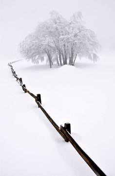 Let it snow. Walking in a Winter Wonderland! Walking in a Winter Wonderland! Let it Snow! Winter Szenen, I Love Winter, Winter Magic, Winter White, Snow White, Winter Christmas, White Light, Black White, Foto Picture