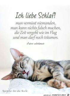 a picture for & pictures - Sprüche Words Quotes, Love Quotes, Funny Quotes, Inspirational Quotes, Sayings, Funny Jokes To Tell, Funny Cats, Night Wishes, Happy Love