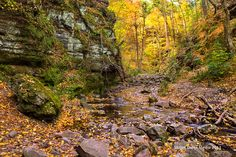 Oct 22, 2013 at Parfrey's Glen State Natural Area.  http://www.devilslakewisconsin.com