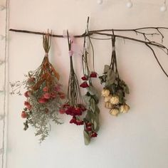 dried flowers are always so pretty. dried flowers are always so pretty. No Rain, Flower Aesthetic, Aesthetic Indie, Aesthetic Pastel, Arte Floral, My New Room, Dried Flowers, How To Dry Flowers, Flowers Nature