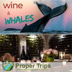Tasting wine in a cellar! Explore the aromas of a wine route whilst admiring the magnificent whales on the Cape Whale Coast. Whale Watching Tours, Golf Tour, Whales, Cellar, Wine Tasting, West Coast, South Africa, Cape, Explore