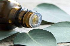 Herbal Oil: Eucalyptus Oil Benefits and Uses Eucalyptus Oil Uses, Eucalyptus Essential Oil, Essential Oils, Eucalyptus Leaves, Eucalyptus Shower, Vicks Vapor Rub, Vapo Rub, Ravintsara, Gum Health