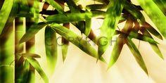 Bild auf Leinwand kaufen FineArtPrint 10140104 Wächter Frank bamboo bambus bambusblaetter bambusblätter bambusrohr bambusstab bambusstaebe bambusstäbe beige blatt blattwerk blätter china entspannung exotisch feng gegenlicht gelb gelbgruen ...