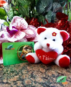 Valentine's Day is coming up! 💘 Looking for a gift for someone special? Think of a gift card! 🎁 Online or in store! #MagazooReptiles Reptile Accessories, Reptiles, Valentines Day, Christmas Ornaments, Holiday Decor, Cards, Gifts, Turtle, Valentine's Day Diy