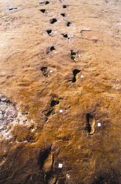 Ancient footprints of early man preserved in mud turned to stone.