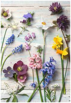 Forårsstemninger, blomster og knopper.