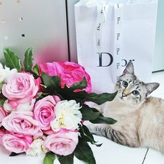 The love for Dior is universal! Credit: theblondmacaron #Diorvalley #cat #kitty # flowers #roses #blushpink #kitten #Dior