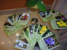 florais de bach - conjunto 40 cartas cartões para consulta
