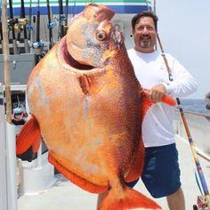 Talk about a big ass fish! This monster opah! #opah #opahfishing#fish #fishing…