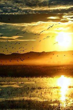 sol e pássaros