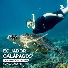 Ecuador - Galápagos - Buceo