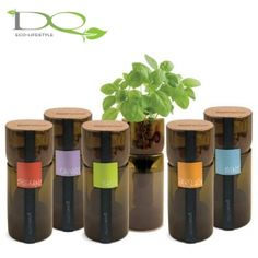 Growing herbs in cut wine bottles! Looks like something I'll be doing!