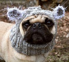 Adorable Baby Koala Bear Hat for Dogs $20