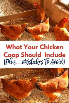 Love this chicken coop checklist. Learn everything that your backyard chicken co… Love this chicken coop checklist. Learn everything that your backyard chicken coop should include and learn costly mistakes that you need to avoid! Small Chicken Coops, Chicken Coup, Portable Chicken Coop, Chicken Coop Designs, Best Chicken Coop, Backyard Chicken Coops, Chicken Coop Plans, Building A Chicken Coop, Chicken Runs