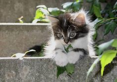 29 Cats and Kittens -