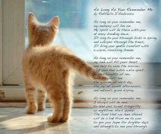 My beautiful fur-babies Pet Grief, Belles Phrases, Animal Poems, Animal Quotes, Pet Poems, I Love Cats, Crazy Cats, Cute Cats, Westies