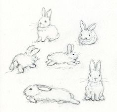 How To Draw A Bunny Step By Step Easter Pinterest Rabbit