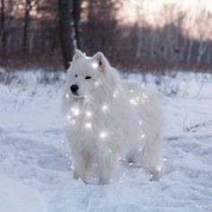 Exceptional Beautiful dogs tips are offered on our site. Check it out and you will not be sorry you did. Exceptional Beautiful dogs tips are offered on our site. Check it out and you will not be sorry you did. Cute Dogs Breeds, Cute Dogs And Puppies, Baby Dogs, Dog Breeds, Doggies, Cutest Dogs, Cute Animal Pictures, Dog Pictures, Beautiful Dogs