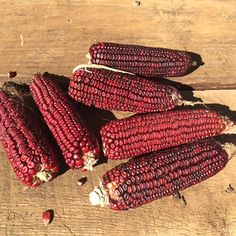 Where do we start? Jimmy Red is a wonderful, almost extinct, red dent corn that fed the coastal areas of South Carolina, Georgia, and Florida many, m...