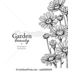 Daisy flower border drawing. vector hand drawn engraved floral frame. chamomile. Daisy flower border drawing. vector hand drawn engraved floral frame. chamomile black ink sketch. wild botanical garden Daisy Flower Drawing, Flower Garden Drawing, Flower Drawing Tutorials, Plant Sketches, Flower Sketches, Sunflower Coloring Pages, Picture Borders, Drawing Bag, Drawing Frames