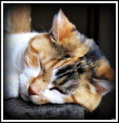 Looks Like Jessica Booty taking a nap