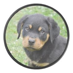 #Doggy McDogface Rottweiler Puppy Hockey Puck - #rottweiler #puppy #rottweilers #dog #dogs #pet #pets #cute