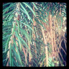 0x388: Větve / Branches (11) Branches, Renaissance, Bird, Animals, Instagram, Animales, Animaux, Birds, Animal