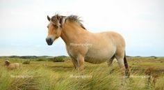 Horse © Anton Zagorulko