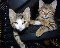 cute office cats - Google Search