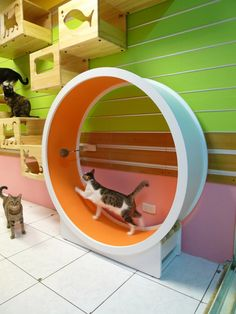 Catswall – A Modular Cat Climbing Wall Perfect for You Pet. I wish we had the space to build one of these!