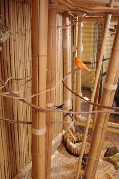 Birds are at home in this natural bamboo flight cage. They get very comfortable in this aviary especially in the summer when green plants are readily available to fill the space. You can open the door, they keep their distance as it's a safe place for any bird. The water feature is shown in the far corner, used for drinking and bathing.
