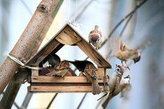 Vogelfutter selber machen: Tipps und Rezepte